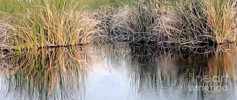 Roland Stanke - Swamp Reflections