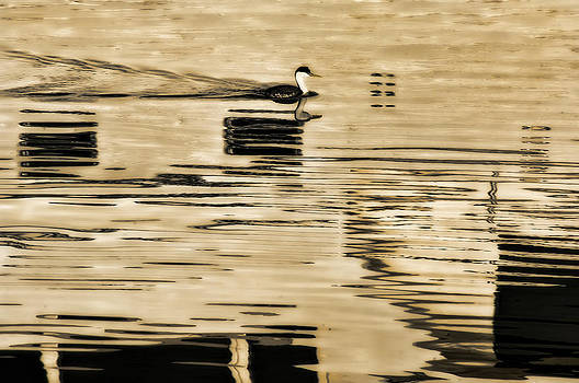 Reflections by Roy Bozarth