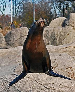 Michelle Cruz - Regal Seal