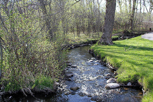 Regner Park Stream by James Hammen
