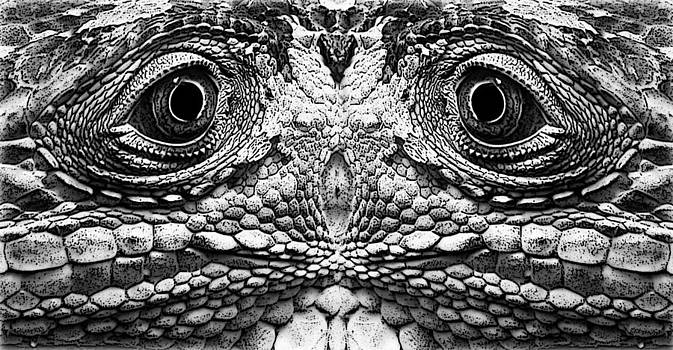 Reptil eyes by Jesus Nicolas Castanon