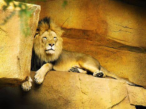 Richelle Munzon - Resting Lion