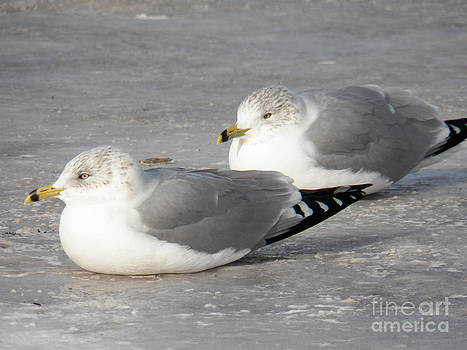 Judy Via-Wolff - Resting on the Ice