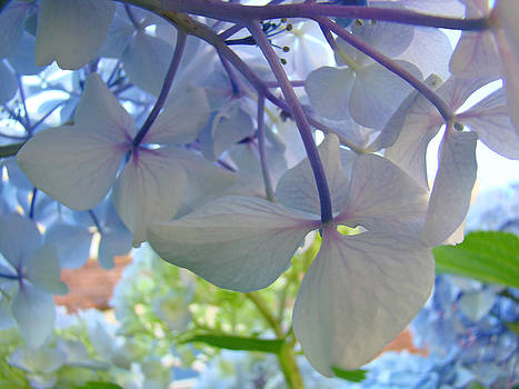 Baslee Troutman - Retro Blue Hydrangea Flowers art prints Garden