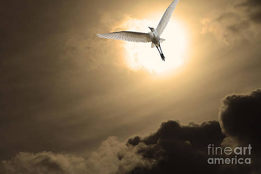 Wingsdomain Art and Photography - Return To Eternity . Gold Cut
