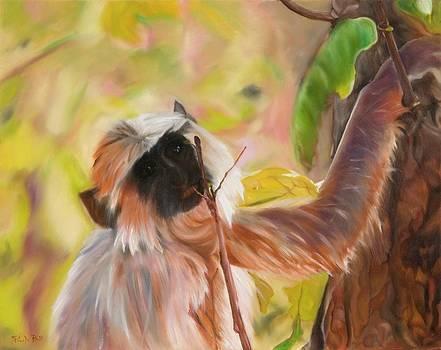 Rhesus Monkey in Tree by Pamela Bell