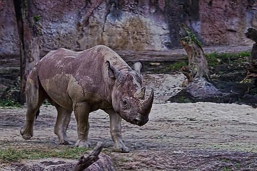 Jason Blalock - Rhino