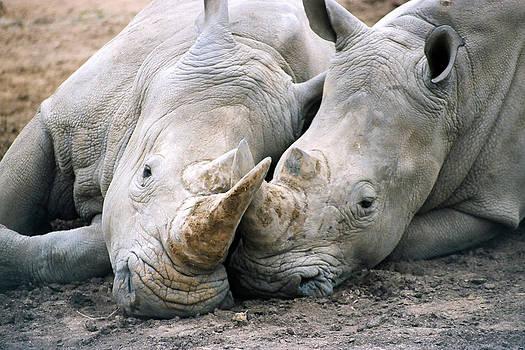 Rhino Love by CJ Clark