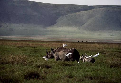 Rhino with Baby Tanzania by John Wolf