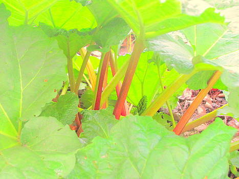 Rhubarb Colors by Amy Bradley