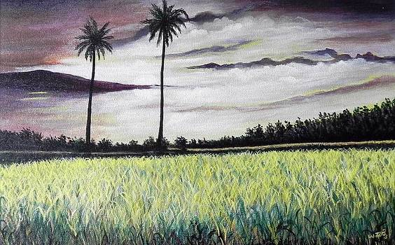 Rice field  by Usha Rai