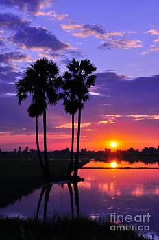 Rice fields at sunset by Tawatchai Sanajai