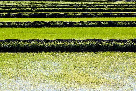 Chris Fullmer - Rice Paddies