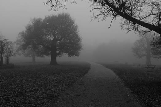 Richmond Park by Maj Seda