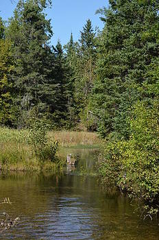 Rifle River in Sept. 2 by Jennifer  King