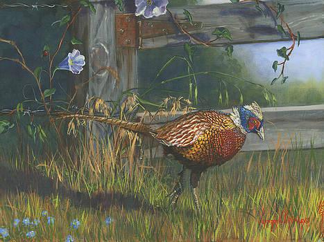 Ringneck Pheasant by Jeff Brimley