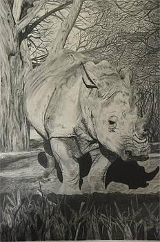 Rino in wild by Casper Venter