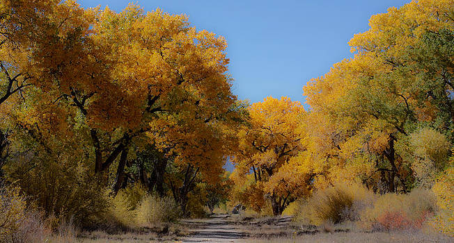 Rio Grande Cottonwoods by Denice Breaux