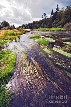 River landscape by Wedigo Ferchland