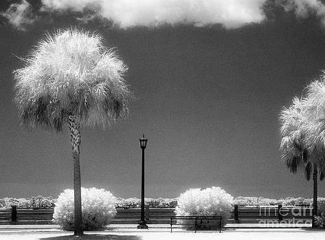 Jeff Holbrook - River Walk in Charleston
