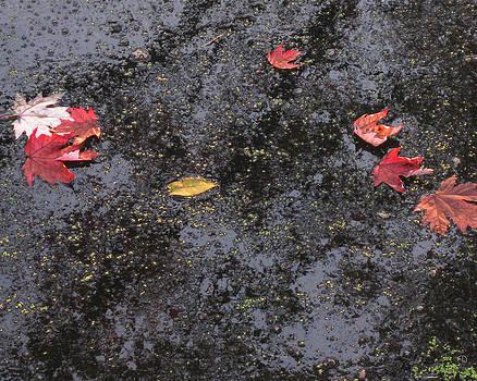 River Water Floating Leaves by Charles Dancik