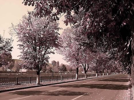 Road by Sorin Ghencea