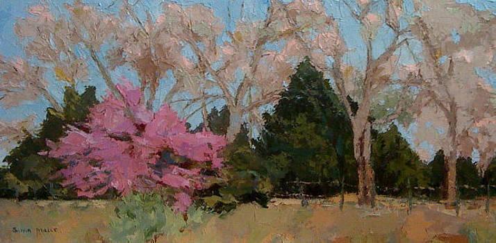 Roadside in spring by Sylvia Miller