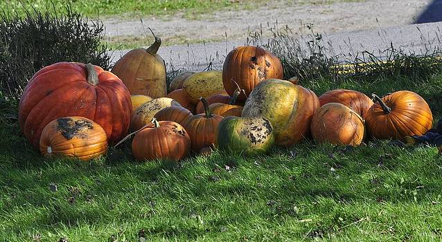 Mary Frances - Roadside Pumpkins
