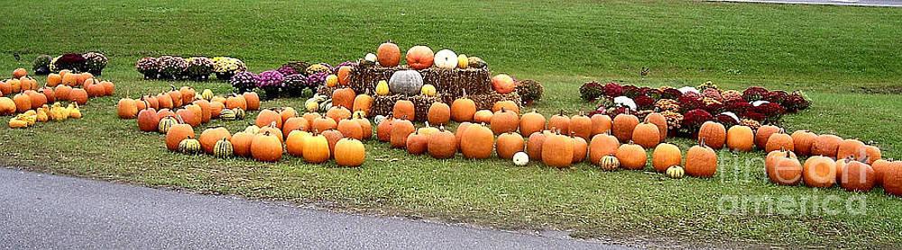 Roadside Pumpkins by Victor Sexton