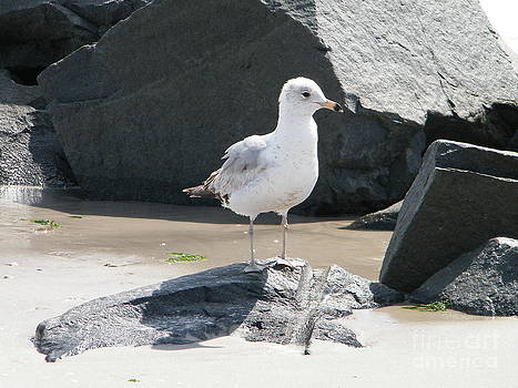 Rocking Seagull by Laurence Oliver