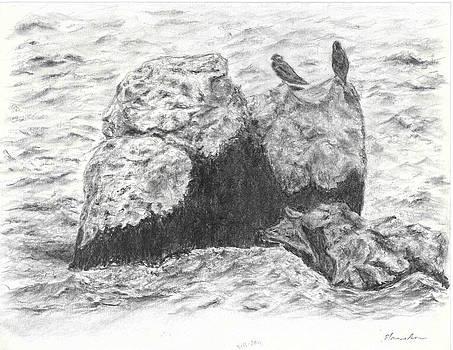 Rocks by Sal Lomick