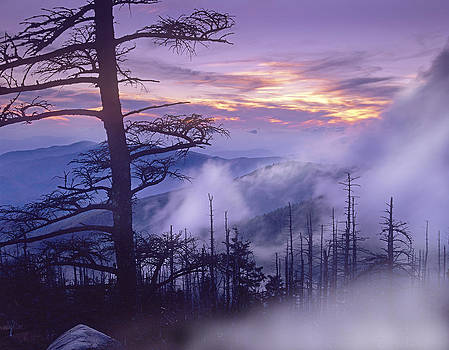 Tim Fitzharris - Rolling Fog On Clingmans Dome Great