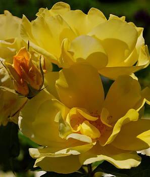 Romantic Rose Bush by Michelle Cruz