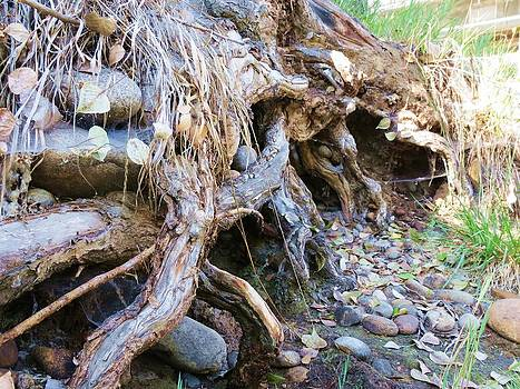 Roots and Stones by Don Barnes