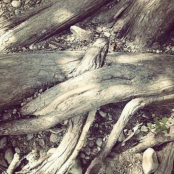#roots by Bella Guzman