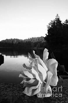 Rose awakening by Derya  Aktas