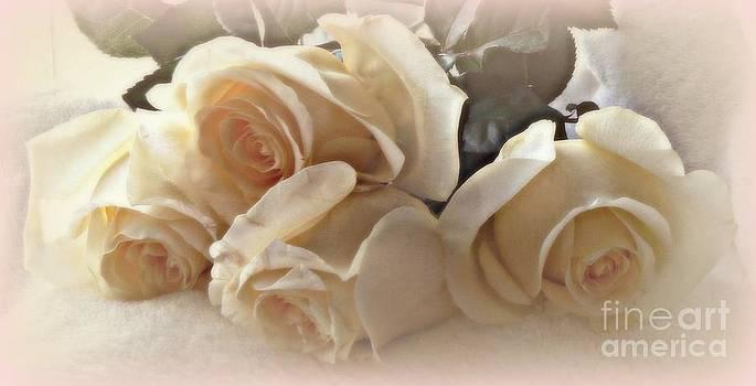Diana Besser - Rose Champagne
