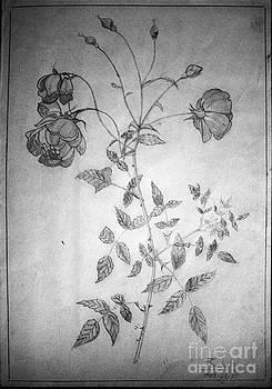 Rose flowers by Deepthi Jayakody