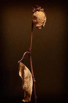 Zoran Buletic - Rose For My Love Never Fade