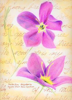 Rose Gentian by Linda Pope