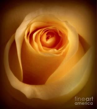 Diana Besser - Rose Glow