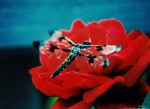 Rose Of A Dragonfly by Kelly Rader