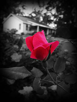 Terry Eve Tanner - Rose Red