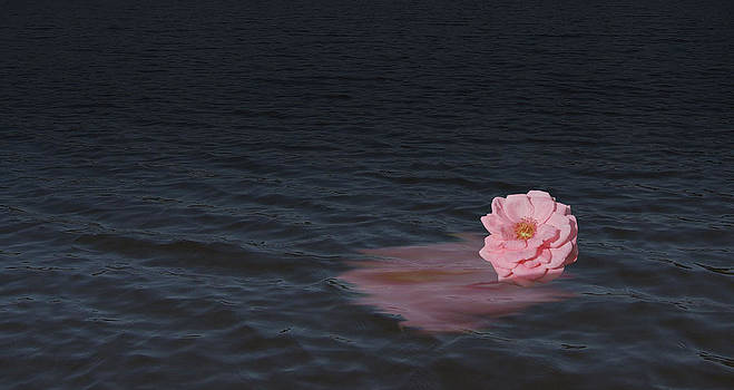 Michelle Cruz - Rose Reflection