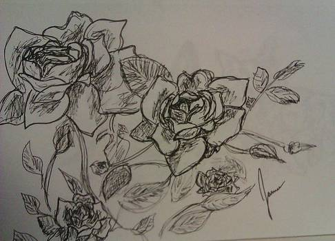 Roses by Jamie Mah