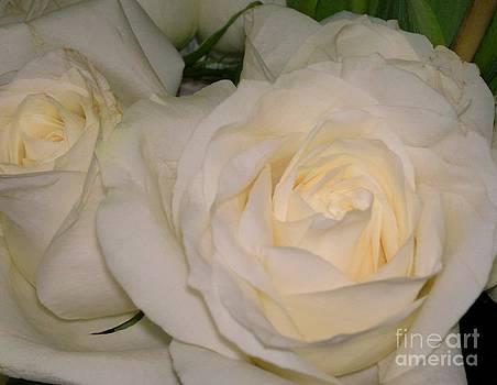 Roses by Dye n  Design