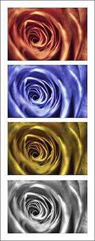 Nigel Jones - Roses