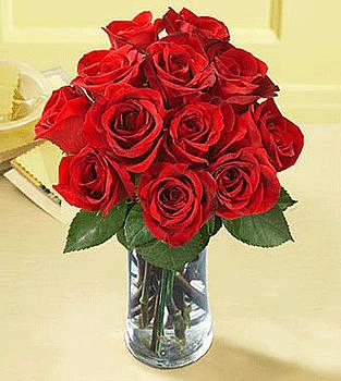 Roses by Shanthi Priya