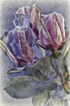 Roses Wet On Wet by Jill Balsam