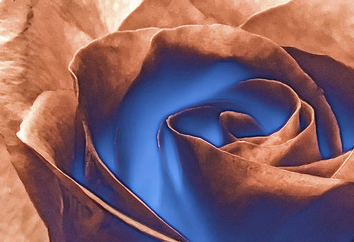 Rosewater by Jill Balsam